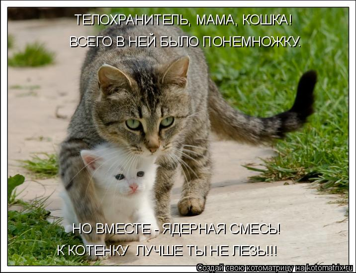 Котоматрица - ТЕЛОХРАНИТЕЛЬ, МАМА, КОШКА! ВСЕГО В НЕЙ БЫЛО ПОНЕМНОЖКУ. НО ВМЕСТЕ - Я