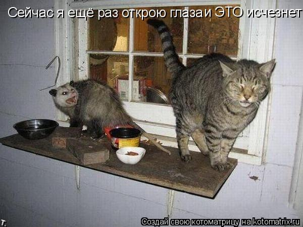 Котоматрица: Сейчас я ещё раз открою глаза и ЭТО исчезнет!