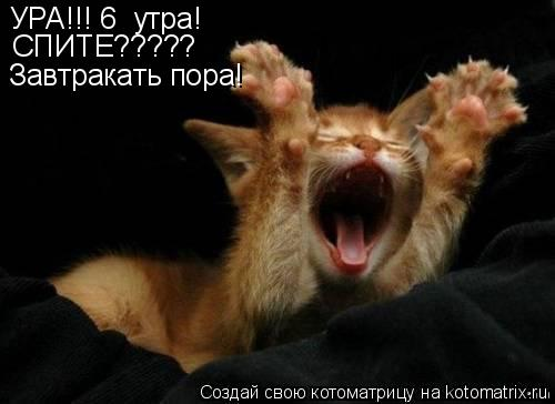 Котоматрица: УРА!!! 6  утра! СПИТЕ????? Завтракать пора!