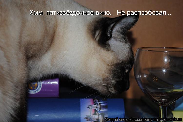 Котоматрица: Хмм, пятизвёздочное вино... Не распробовал...