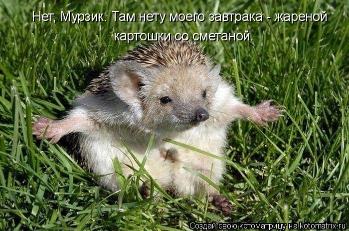 Котоматрица: Нет, Мурзик. Там нету моего завтрака - жареной  картошки со сметаной.
