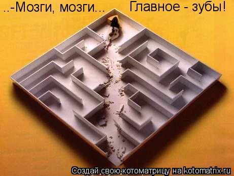 Котоматрица - ..-Мозги, мозги... Главное - зубы!