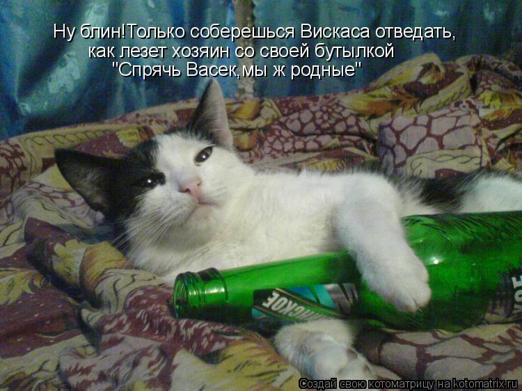 """Котоматрица: Ну блин!Только соберешься Вискаса отведать,    как лезет хозяин со своей бутылкой  """"Спрячь Васек,мы ж родные"""""""