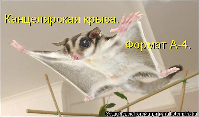 Котоматрица: Канцелярская крыса. Формат А-4.