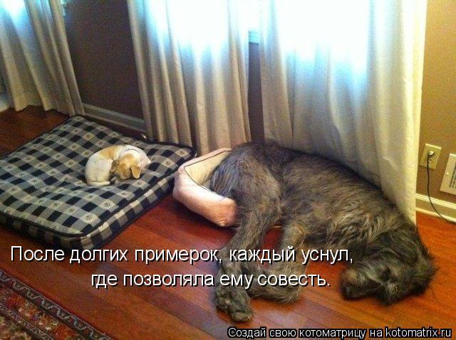 Котоматрица: После долгих примерок, каждый уснул,  где позволяла ему совесть.