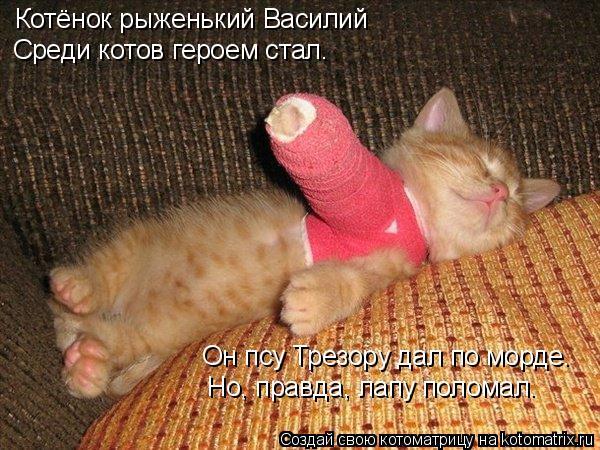 Котоматрица: Котёнок рыженький Василий Среди котов героем стал. Он псу Трезору дал по морде. Но, правда, лапу поломал.