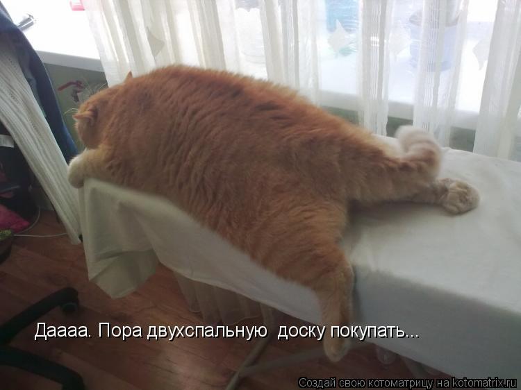 Котоматрица: Даааа. Пора двухспальную  доску покупать...