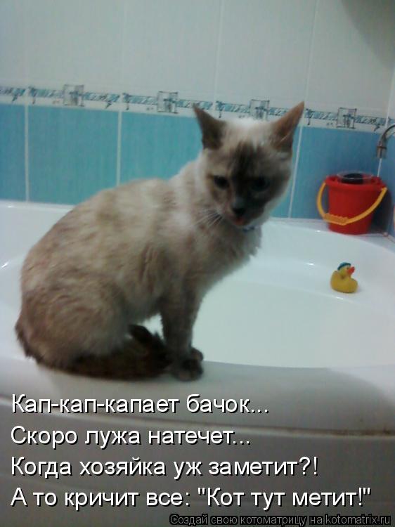 "Котоматрица: Кап-кап-капает бачок... Скоро лужа натечет... Когда хозяйка уж заметит?! А то кричит все: ""Кот тут метит!"""