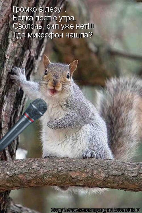 Котоматрица: Громко в лесу... Белка поет с утра... Сволочь, сил уже нет!!! Где микрофон нашла?