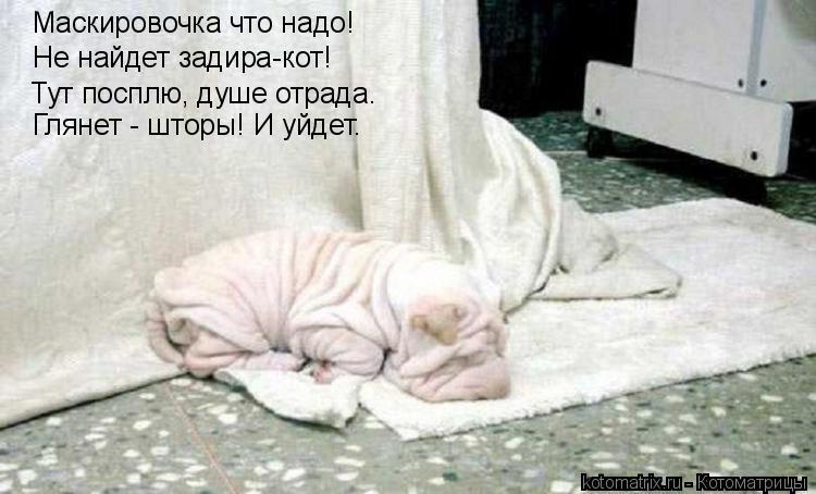 Котоматрица - Маскировочка что надо! Не найдет задира-кот! Тут посплю, душе отрада.