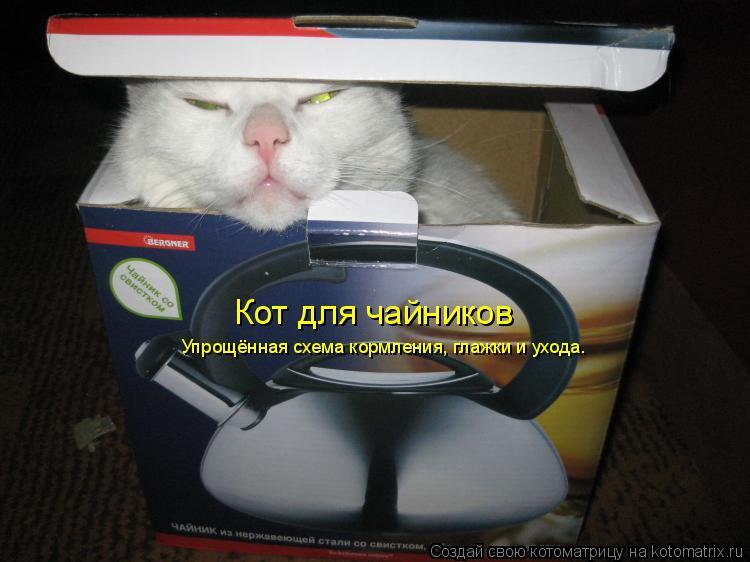 Котоматрица: Кот для чайников Упрощённая схема кормления, глажки и ухода.