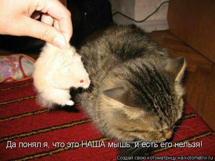 Котоматрица: Да понял я, что это НАША мышь, и есть его нельзя!