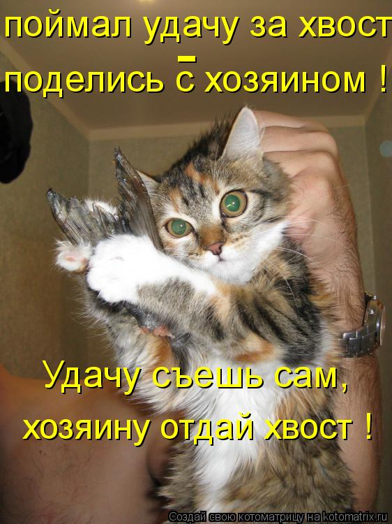 Котоматрица: поделись с хозяином ! поймал удачу за хвост  - Удачу съешь сам, хозяину отдай хвост !