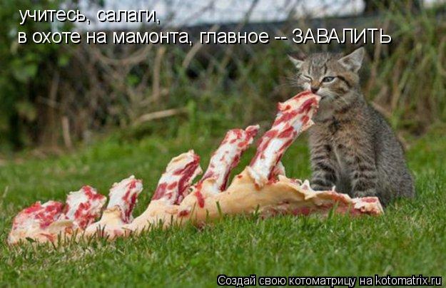 Котоматрица: учитесь, салаги,  в охоте на мамонта, главное -- ЗАВАЛИТЬ
