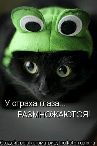 Котоматрица: У страха глаза... РАЗМНОЖАЮТСЯ!