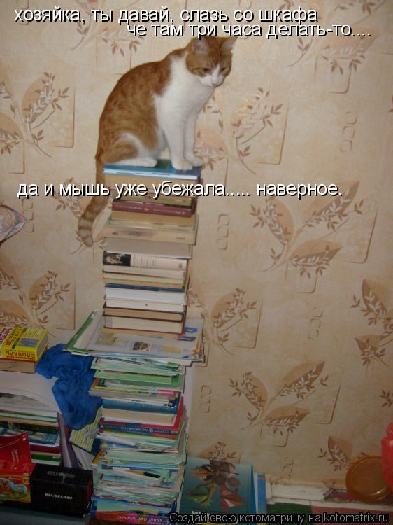 Котоматрица: хозяйка, ты давай, слазь со шкафа че там три часа делать-то.... да и мышь уже убежала..... наверное.