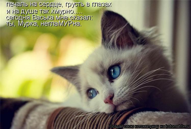 Котоматрица: печаль на сердце, грусть в глазах и на душе так хмурно..... сегодня Васька мне сказал: ты, Мурка, неглаМУРна.