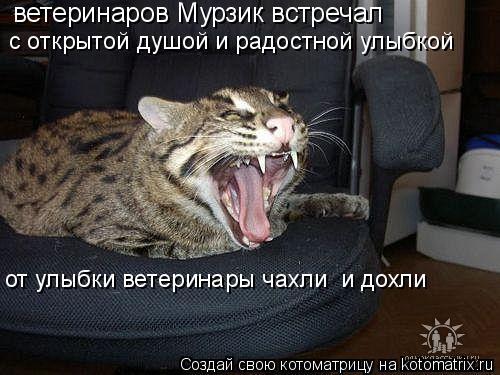 Котоматрица: ветеринаров Мурзик встречал с открытой душой и радостной улыбкой от улыбки ветеринары чахли  и дохли