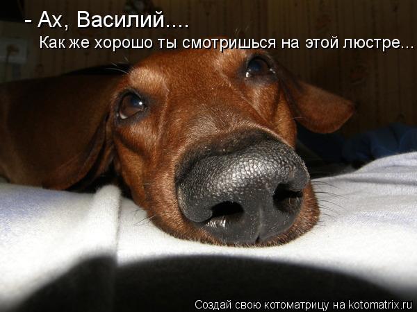 Котоматрица: - Ах, Василий.... Как же хорошо ты смотриься Как же хорошо ты смотриьс Как же хорошо ты смотришься на этой люстре...