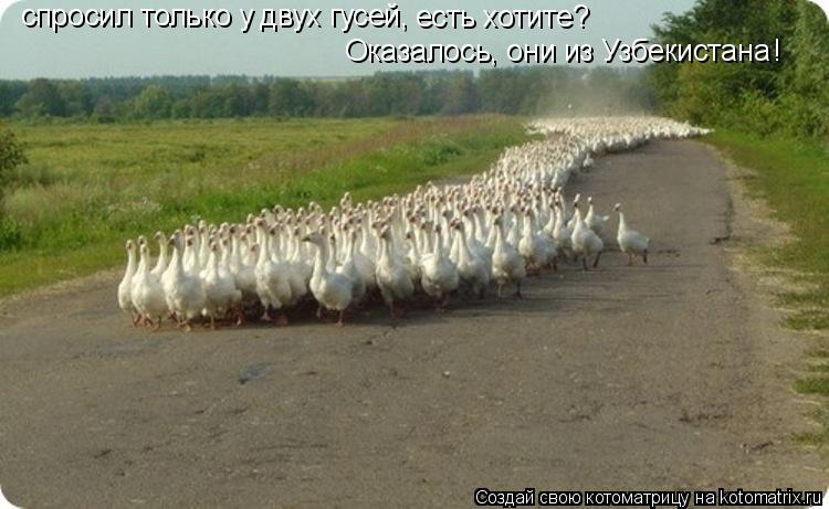 Котоматрица: спросил только у двух гусей, есть хотите? Оказалось, они из Узбекистана !