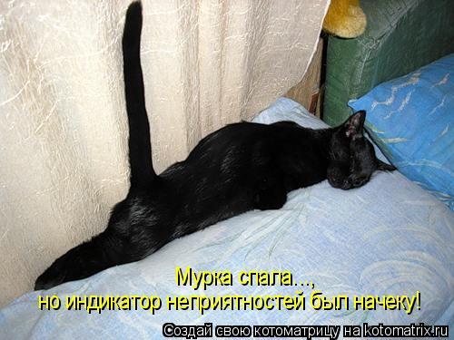 Котоматрица - Мурка спала..., но индикатор неприятностей был начеку!