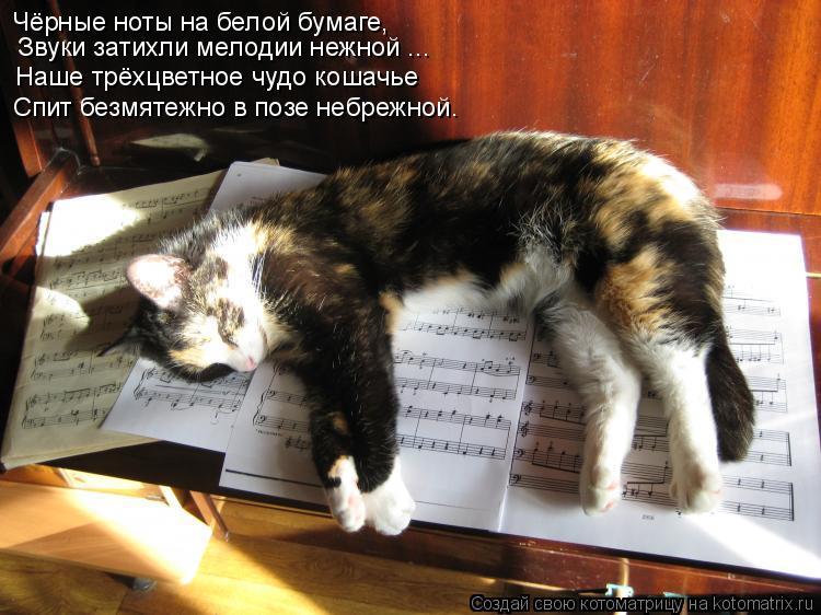 Чёрные ноты на белой бумаге,  Звуки затихли мелодии нежной ... Наше трёхцветное чудо кошачье Спит безмятежно в позе небрежной.