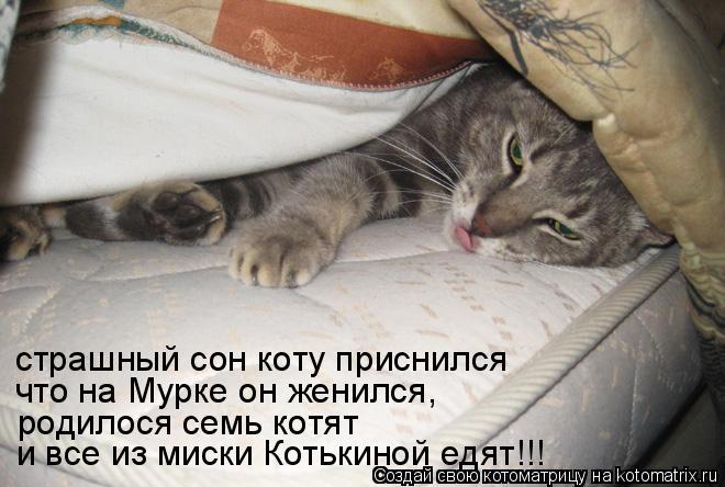 Если снятся коты много