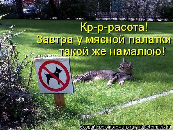 http://kotomatrix.ru/images/lolz/2011/08/08/965520.jpg