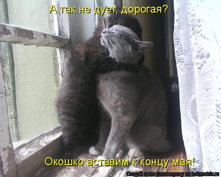 Котоматрица: А так не дует, дорогая? Окошко вставим к концу мая!