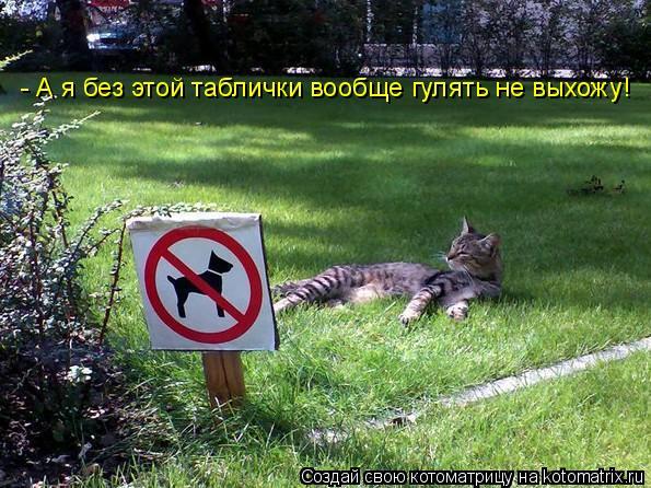 Котоматрица: - А я без этой таблички вообще гулять не выхожу!