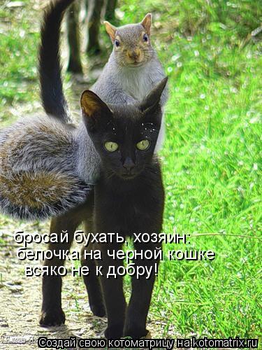 Котоматрица: белочка на черной кошке бросай бухать, хозяин: всяко не к добру!