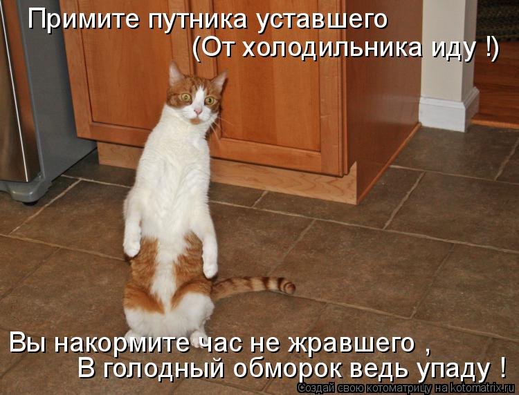 Котоматрица: Примите путника уставшего (От холодильника иду !) Вы накормите час не жравшего , В голодный обморок ведь упаду !