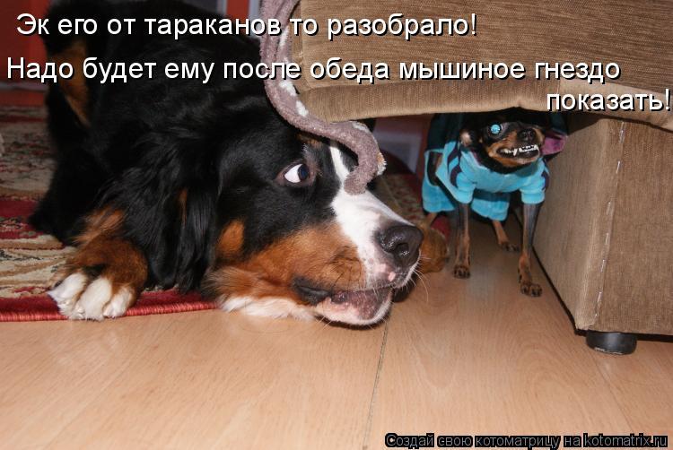 Котоматрица: Эк его от тараканов то разобрало! Надо будет ему после обеда мышиное гнездо показать!