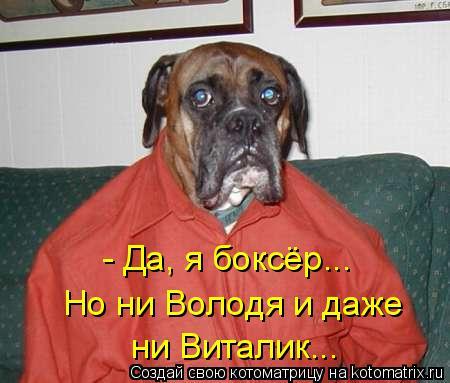 Котоматрица: - Да, я боксёр... Но ни Володя и даже ни Виталик...