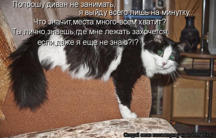 Котоматрица: Попрошу диван не занимать, я выйду всего лишь на минутку... Что значит,места много-всем хватит? Ты,лично,знаешь,где мне лежать захочется, если