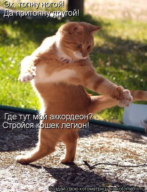 Котоматрица: Эх, топну ногой!  Да притопну другой! Где тут мой аккордеон? -  Стройся кошек легион!