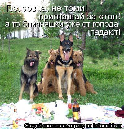Котоматрица - Петровна, не томи!  приглашай за стол! а то близняшки уже от голода  п
