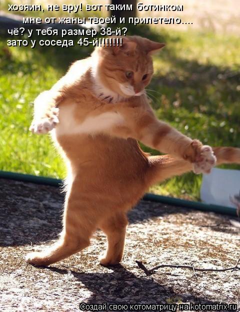 Котоматрица: хозяин, не вру! вот таким ботинком  мне от жаны твоей и прилетело.... чё? у тебя размер 38-й?  зато у соседа 45-й!!!!!!!