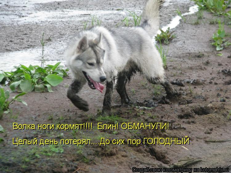 Котоматрица: Волка ноги кормят!!!!  Блин! ОБМАНУЛИ! Целый день потерял....До сих пор ГОЛОДНЫЙ