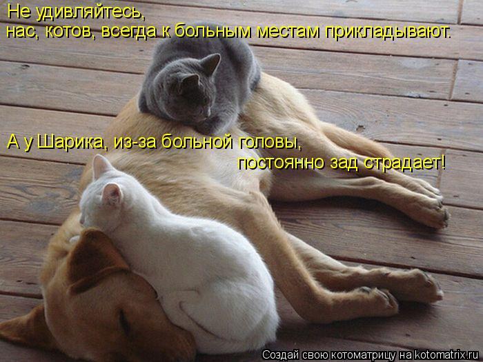 Не удивляйтесь,   нас, котов, всегда к больным местам прикладывают.    А у Шарика, из-за больной головы,  постоянно зад страдает!