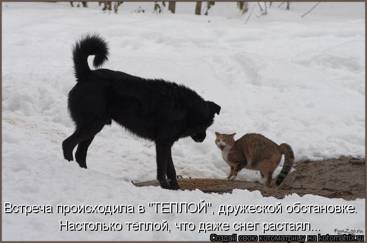 """Котоматрица: Встреча происходила в """"ТЕПЛОЙ"""", дружеской обстановке. Настолько тёплой, что даже снег растаял..."""