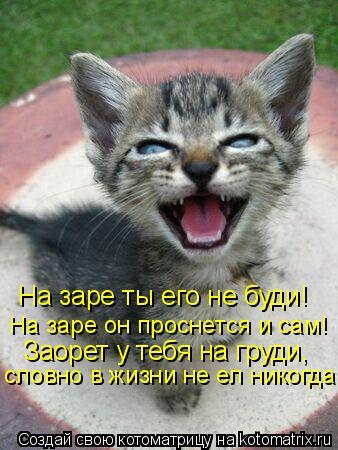 Котоматрица: Заорет у тебя на груди, словно в жизни не ел никогда! На заре ты его не буди!  На заре он проснется и сам!