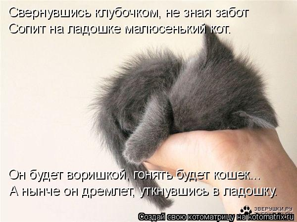 Котоматрица: Свернувшись клубочком, не зная забот Сопит на ладошке малюсенький кот. Он будет воришкой, гонять будет кошек... А нынче он дремлет, уткнувшис