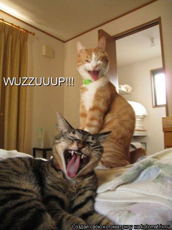 Котоматрица: WUZZUUUP!!!