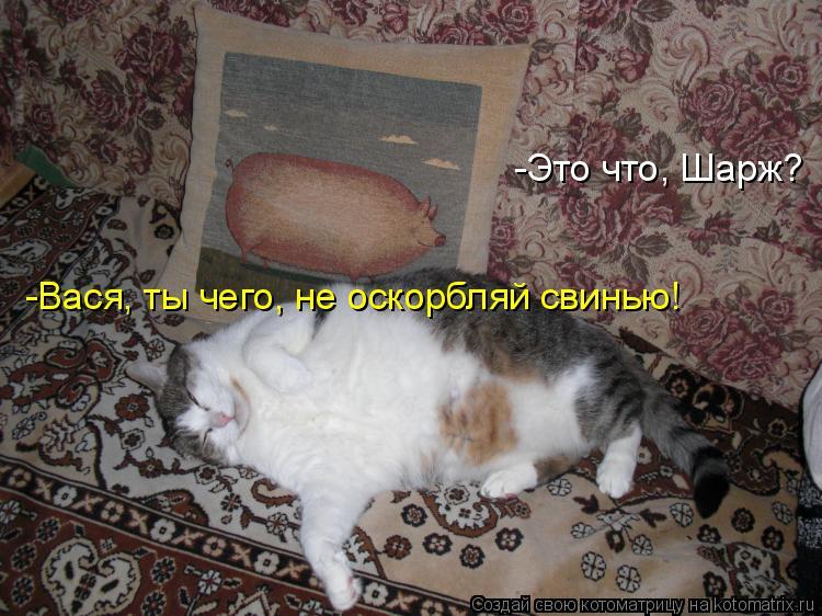 Котоматрица: -Это что, Шарж? -Вася, ты чего, не оскорбляй свинью!