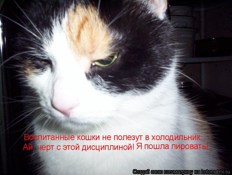 Котоматрица: Воспитанные кошки не полезут в холодильник... Ай, черт с этой дисциплиной! Я пошла пировать!