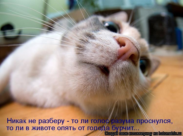 Котоматрица: Никак не разберу - то ли голос разума проснулся,  то ли в животе опять от голода бурчит...