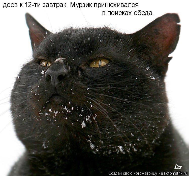 Котоматрица: доев к 12-ти завтрак, Мурзик принюхивался в поисках обеда.