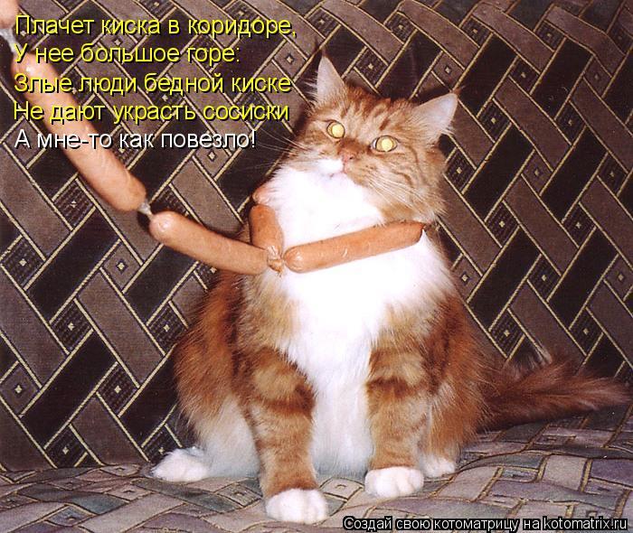 реки котенок хочет в коридор Ватсап