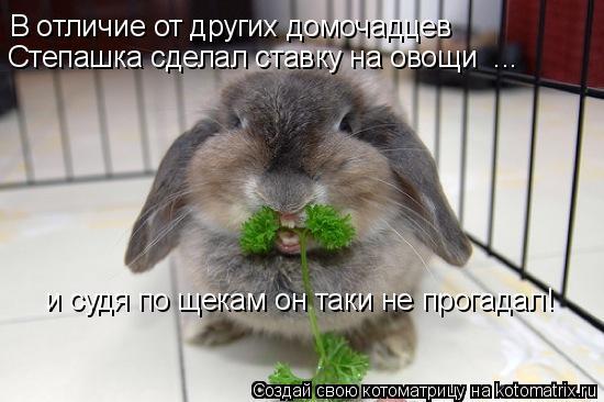 Котоматрица: В отличие от других домочадцев   Степашка сделал ставку на овощи  ... и судя по щекам он таки не прогадал!